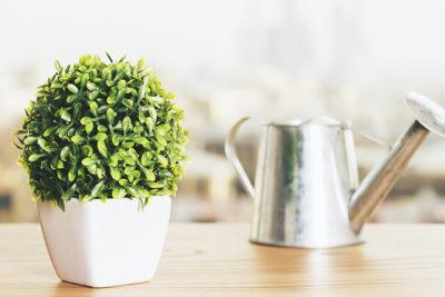 Arroser ses plantes mais comment ?
