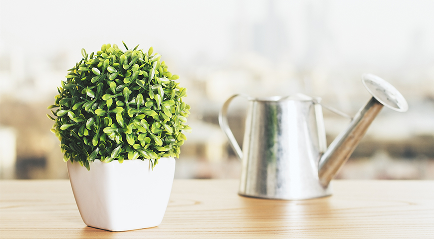 Conseils astuces de fleuriste et jardinier v g tal for Conseil de jardinier