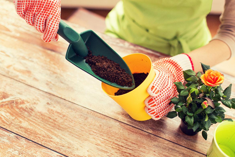 Comment bien rempoter une plante ?
