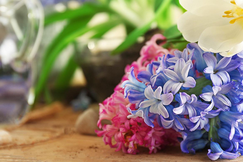 jacinthe lys conseils pour les conserver v g tal fleurs jardins fleuriste allauch. Black Bedroom Furniture Sets. Home Design Ideas