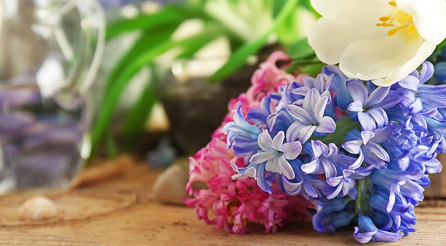 Jacinthe lys conseils pour les conserver v g tal - Quand faut il couper les fleurs fanees des hortensias ...