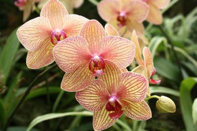 Comment entretenir des orchidées ?