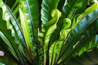 Comment entretenir ses plantes ?